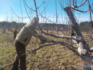 Orchard Pruning_Resized.jpg