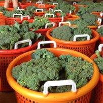 Broccoli Featured