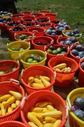 Produce Varieties